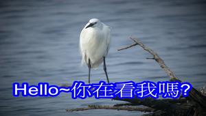 鳥類圖片-資源代表圖