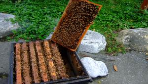 蜂蜜-資源代表圖