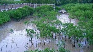 發現濕樂園-認識濕地ppt