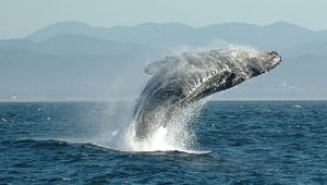 海洋哺乳動物