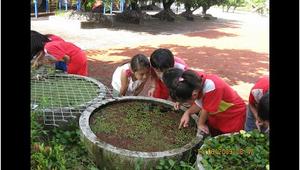 校園水生植物大探索