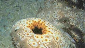 海參如何呼吸?
