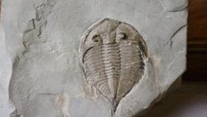 生存於遠古海洋中的三葉蟲