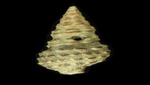 Batillaria sordida (黑瘤海蜷)-資源代表圖